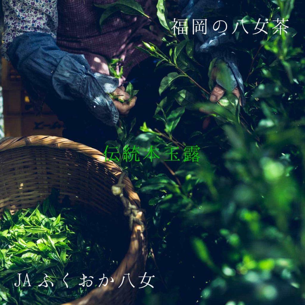 伝統本玉露-玉露-最高-最高級-茶-緑茶-八女茶-八女-福岡-美味しい-お茶