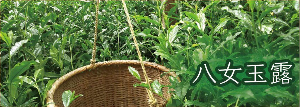 八女玉露 伝統本玉露 玉露 製法 高級茶 八女茶 日本茶 緑茶 健康 GI