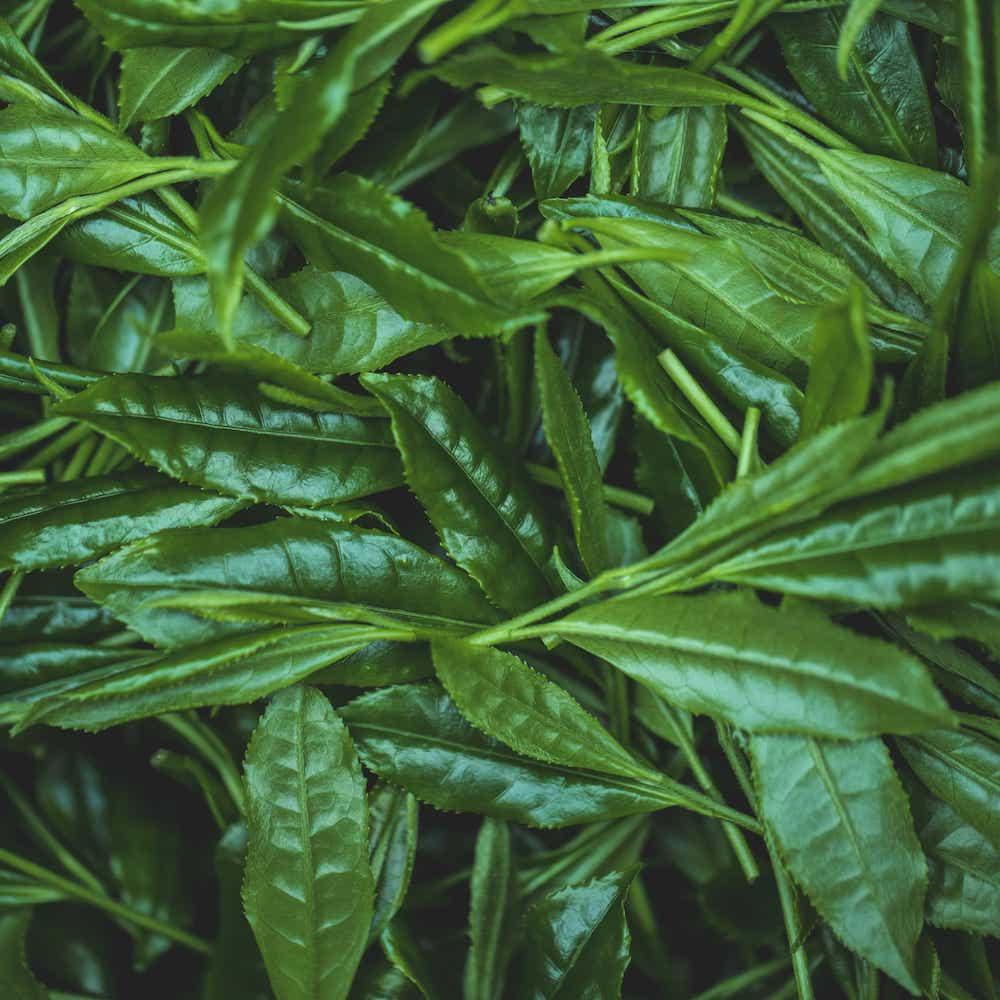 yamecha japanesegreentea gyokuro8
